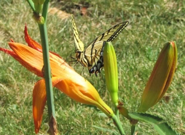 Butterfly3.7.20