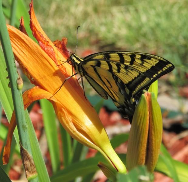 Butterfly4.7.20
