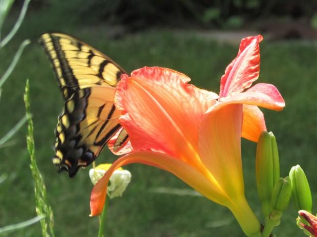 Butterfly5.7.20