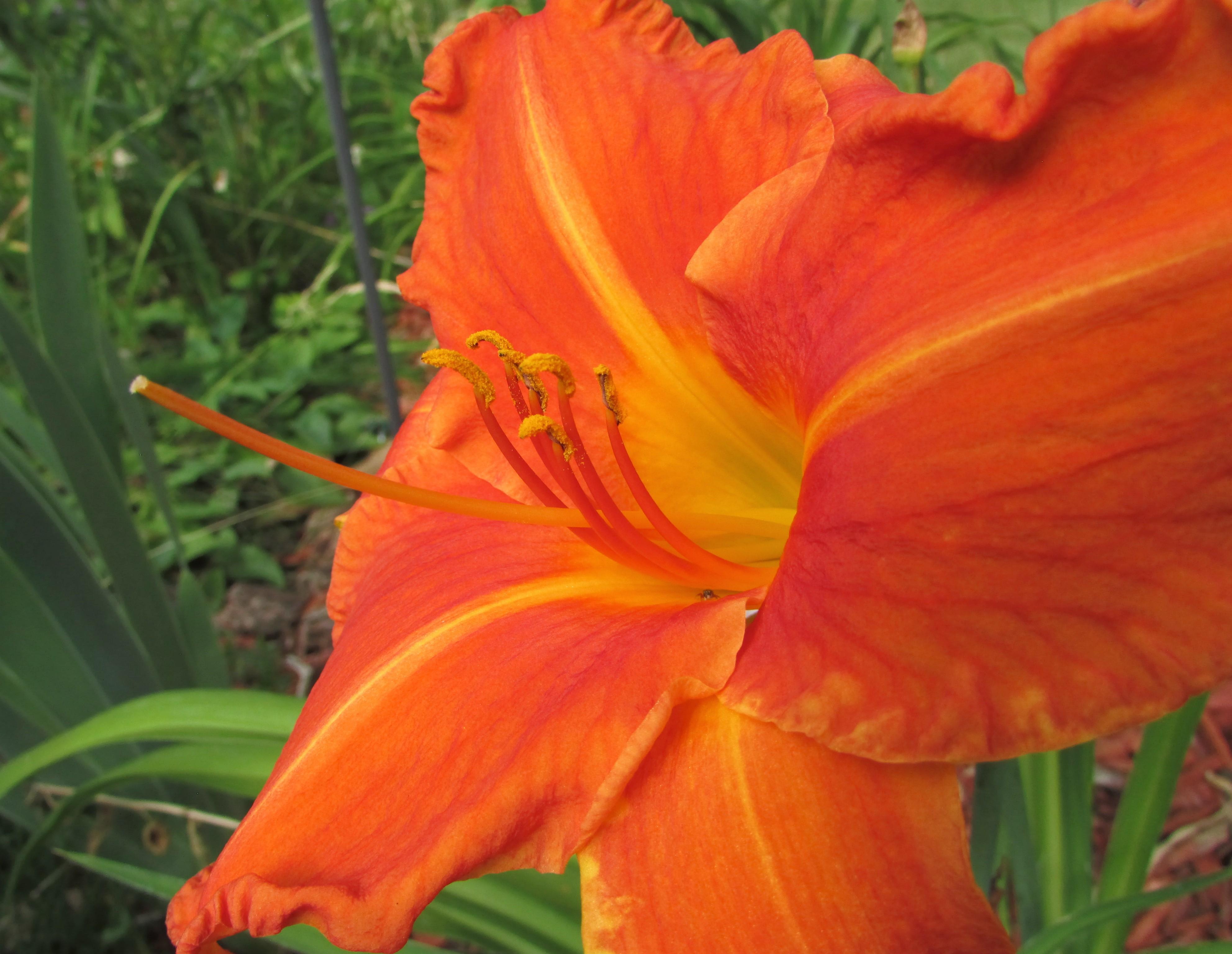 OrangeVols5.7.21
