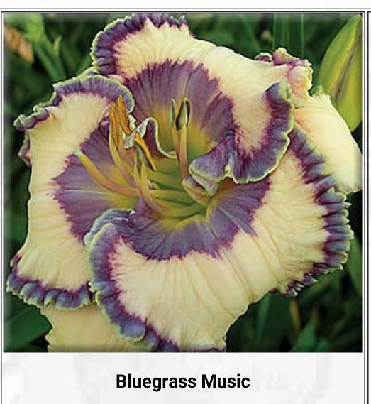 blue grass music.png