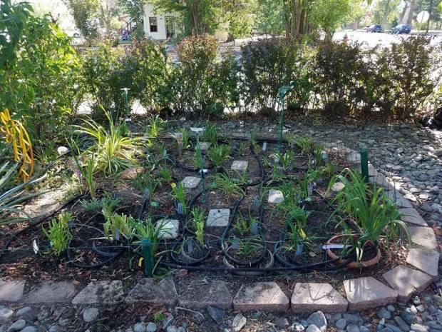 SW garden after pots.jpg