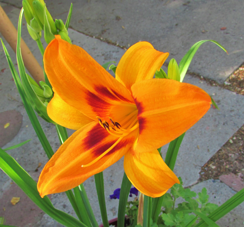 Saratoga Springtime6.5.1