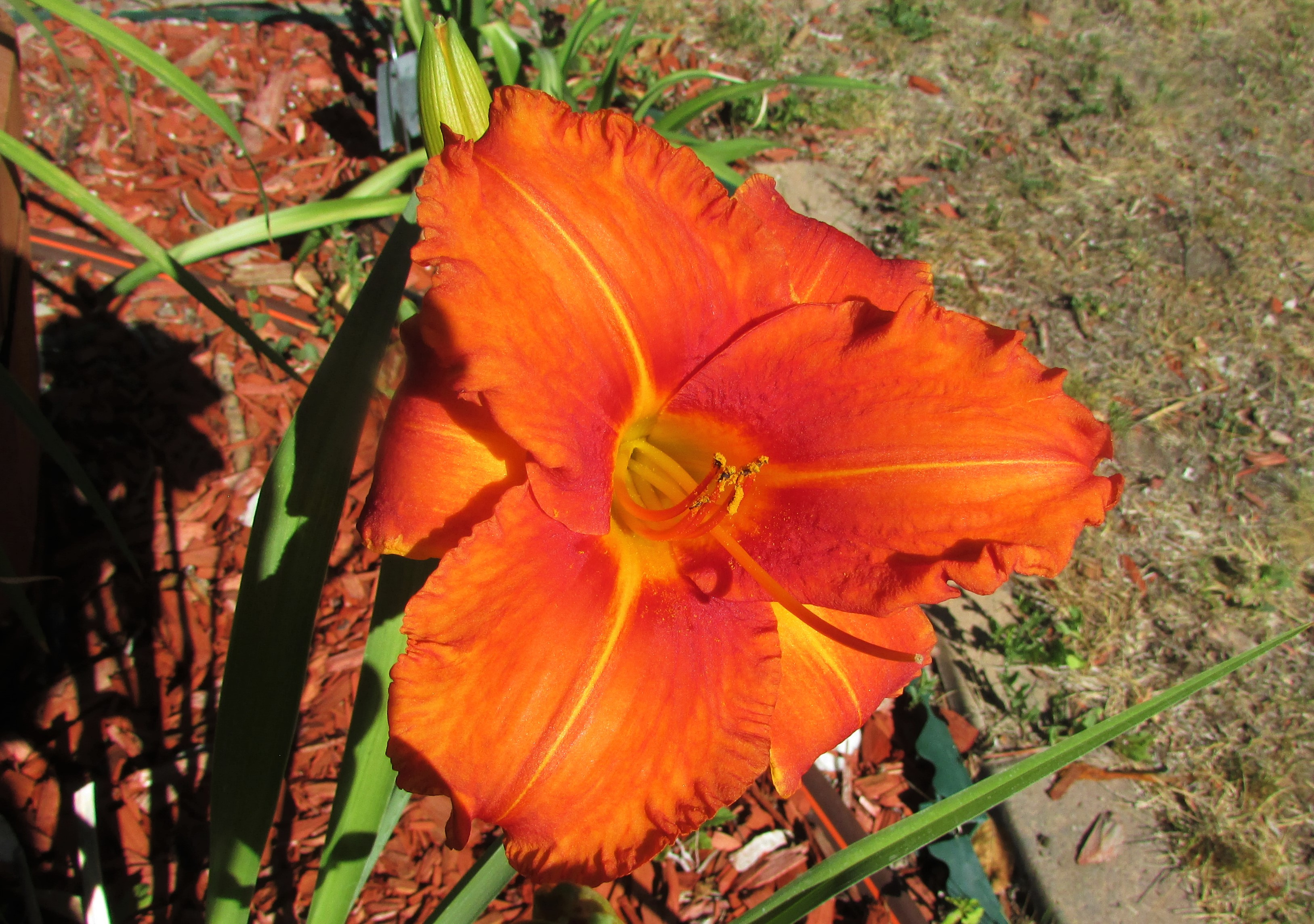 OrangeVols7.23.4.jpg