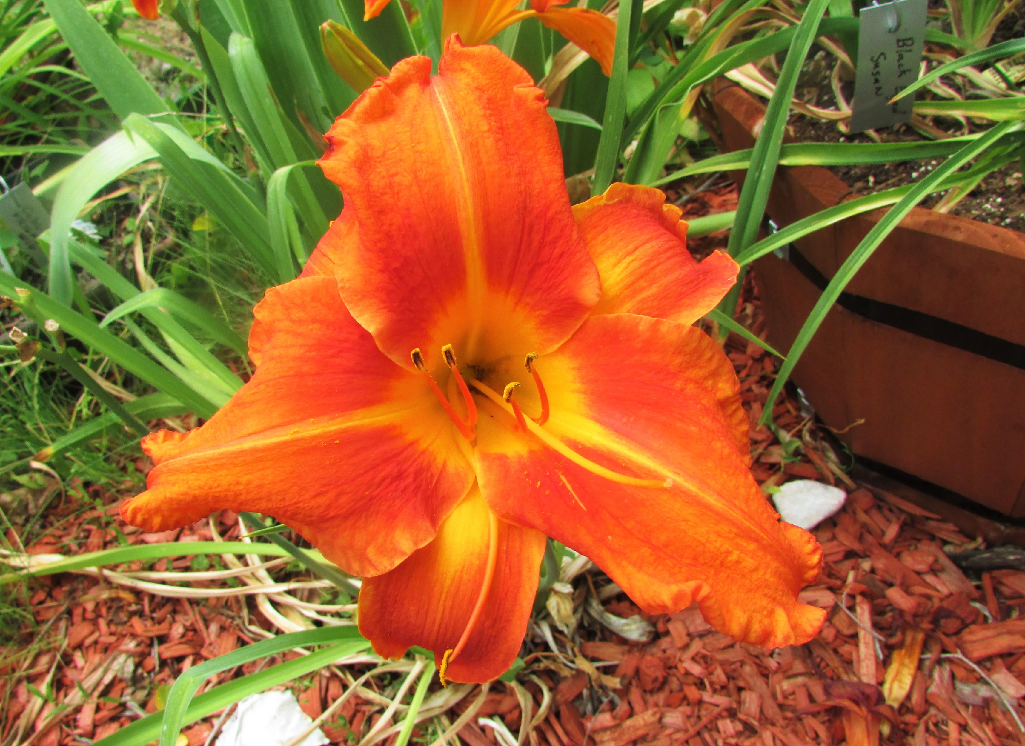 OrangeVols8.3.1.jpg
