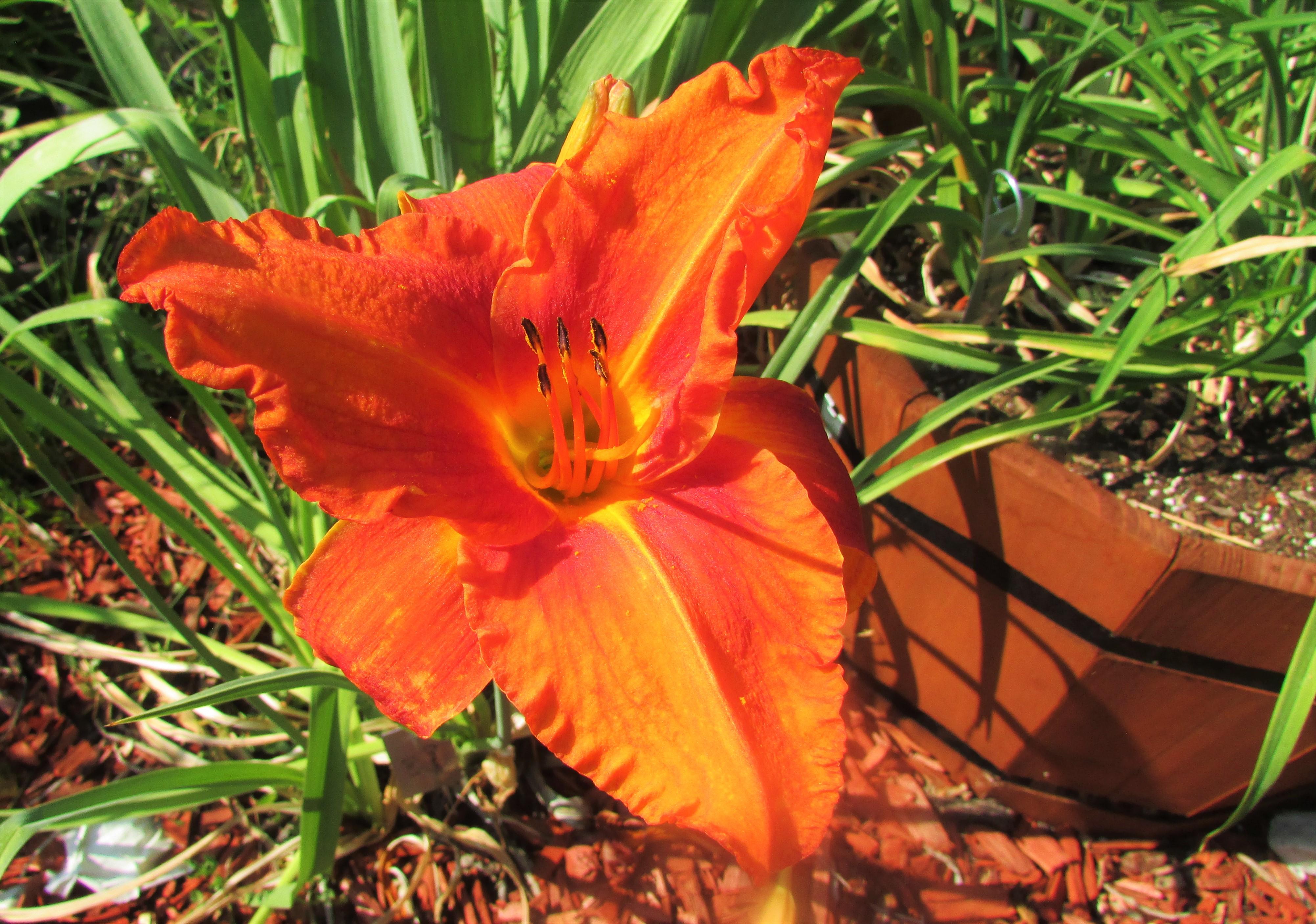 OrangeVols8.7.1.jpg