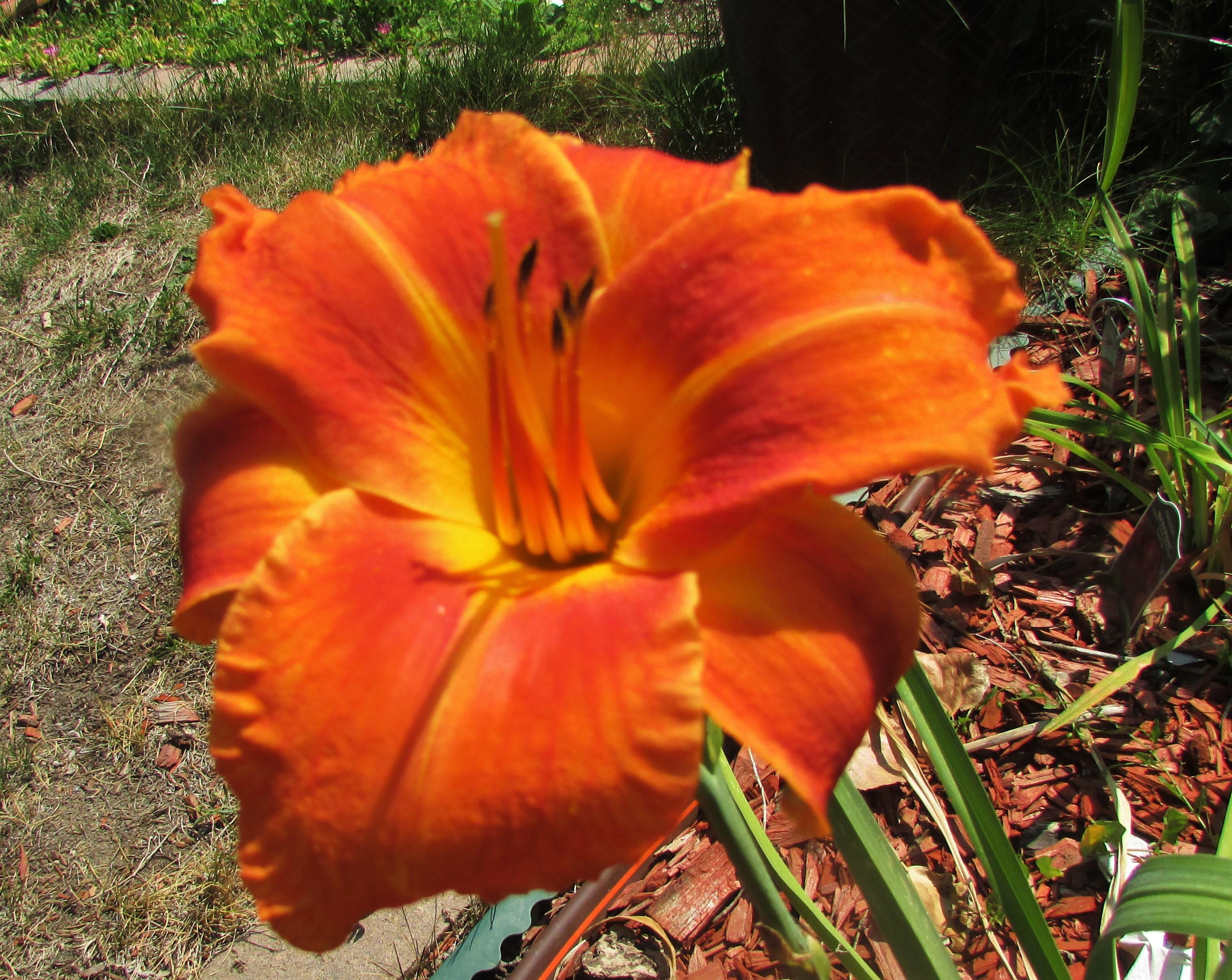 OrangeVols8.8.2.jpg