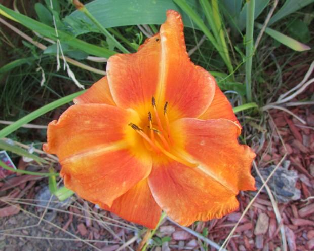 OrangeVols8.15.1.jpg